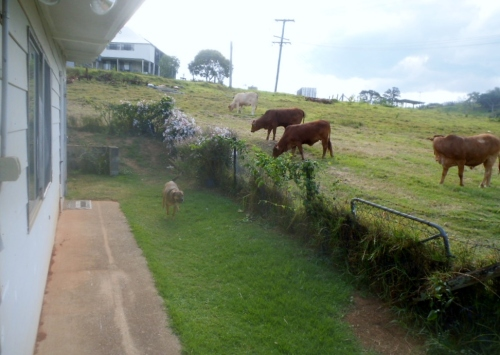 There's nothing quite like having cows a few steps outside your door.